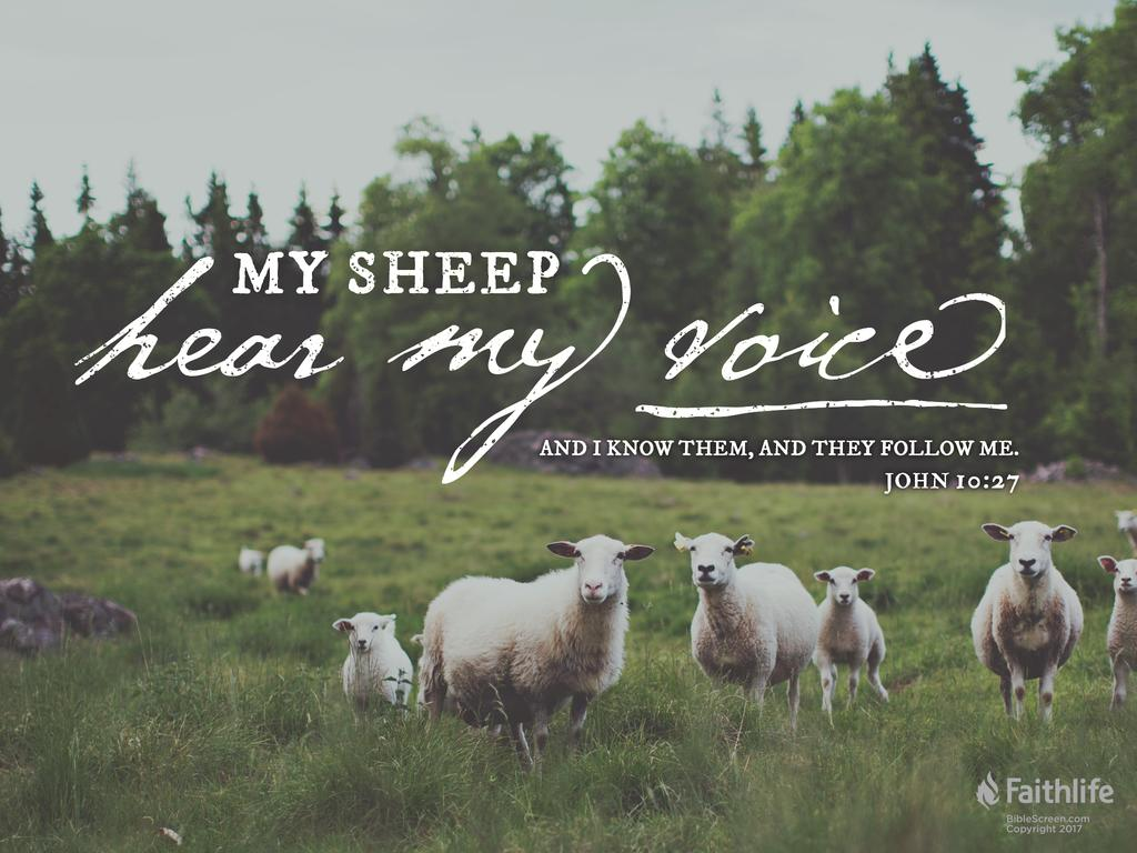 John 10:27 KJV 1900 - My sheep hear my voice,… | Biblia
