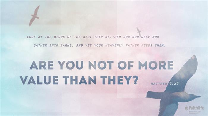 Matthew 6:26 (NIV) - Matthew 6:26 NIV - Look at the birds of the ...